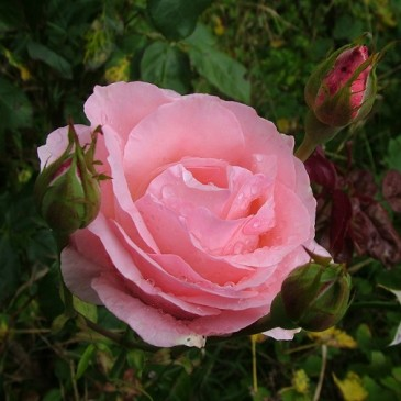 Kvetoucí dozvuky léta