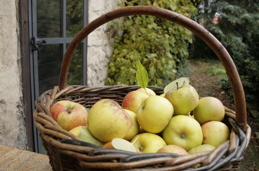 p-27-rijen-jablka-web