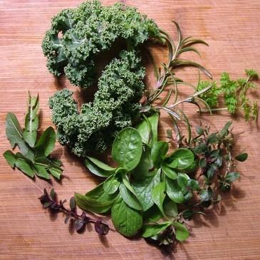 První zelenina za soumraku