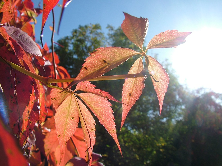 dohliny-podzimni-momentka2