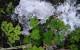 1-dohliny-bylinky